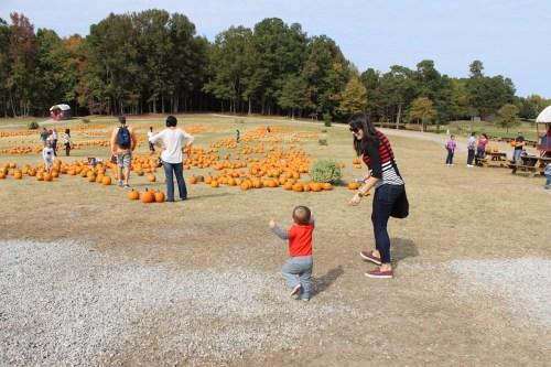 pumpkinpicking2015-10
