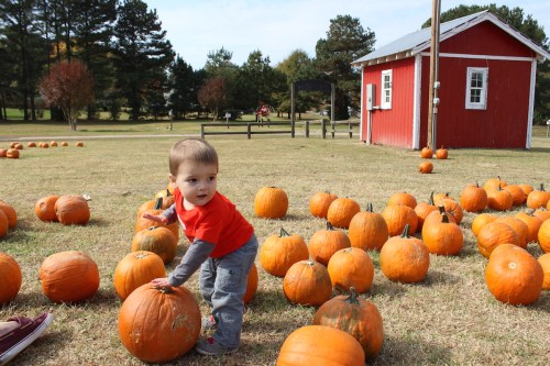 pumpkinpicking2015-11