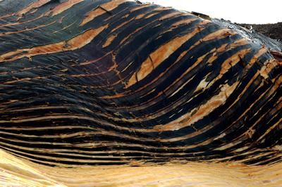 Gerardo Colman Lerner: Backgrounds & Textures &emdash; Whale leather