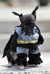 1Chihuahua Batman- credito AFP- Getty Images