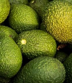 Eerste Colombiaanse avocado's naar Japan