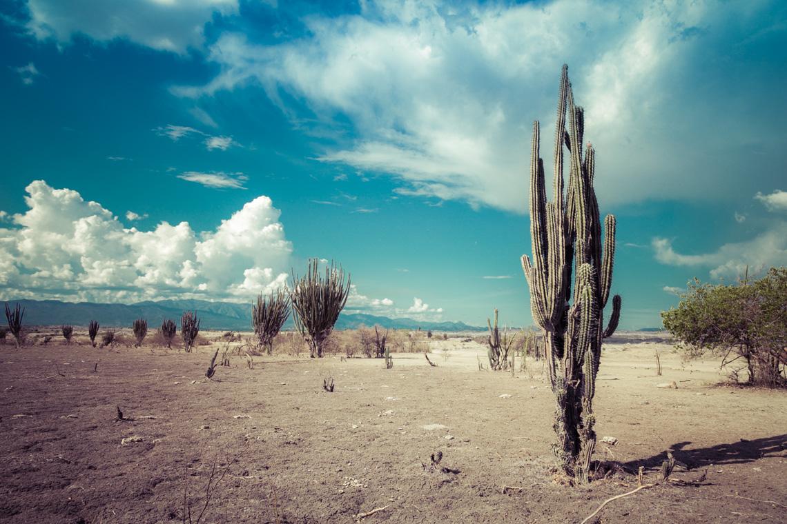 Cactus in de Tatacoa van Colombia