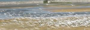 Нац. парк Острова Саламанка - департамент Атлантико
