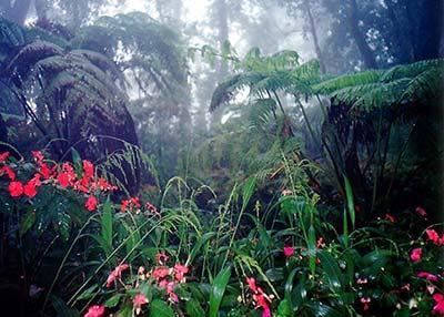 Lluvia-en-la-selva