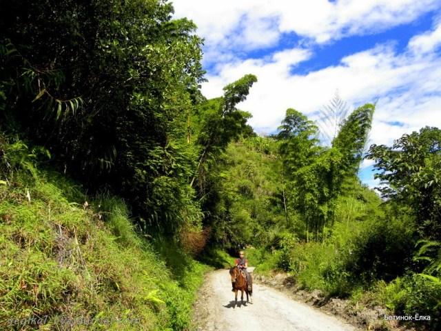 Простые прелести деревенской жизни