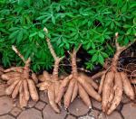 Особенности некоторых тропических овощей