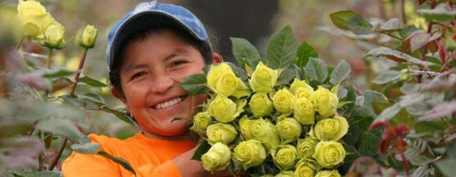 Fairtrade-flower-producer