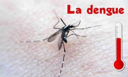 J'ai chopé la dengue (à cause des «mosquitos»)
