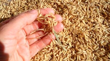 arroz productores importar colombia peru
