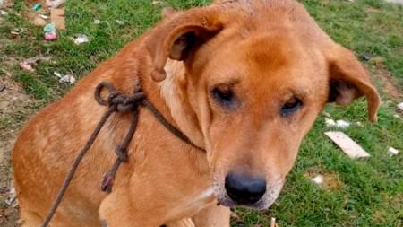 maltrato animal perro judicializar floridablanca