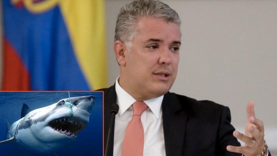 Resultado de imagen para caza de tiburones en colombia