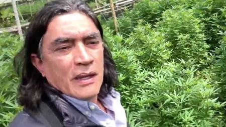gustabo volivar cannabis