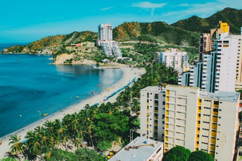 cocora valley wax palm Colombia