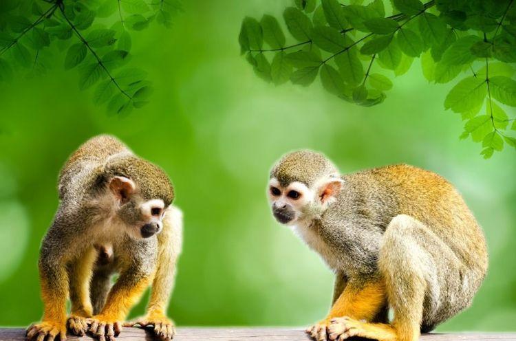 https://colombiatours.travel/por-que-visitar-el-amazonas-4-razones/