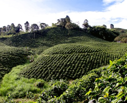 -Cultural landscape -Coffee maker