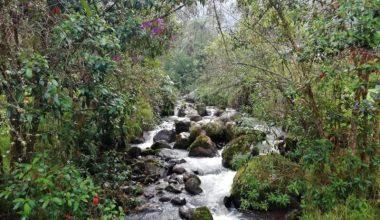 Pasadia Termales de San Vicente - Santa Rosa de Cabal - Reserva Natural - Eje Cafetero - Colombia - Plan con Transporte
