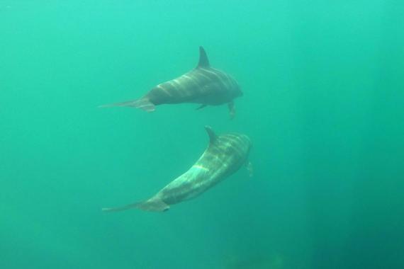 Delfines - Nuqui Choco - Pacifico Colombiano - Planes Turísticos - ColombiaTours