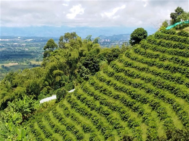 Plan Alta Montaña en el Eje Cafetero - Colombia - Plan Turístico - Paisaje Cultural Cafetero - Tour del Cafe - Eje Cafetero Tour del Café Altagracia-mamá