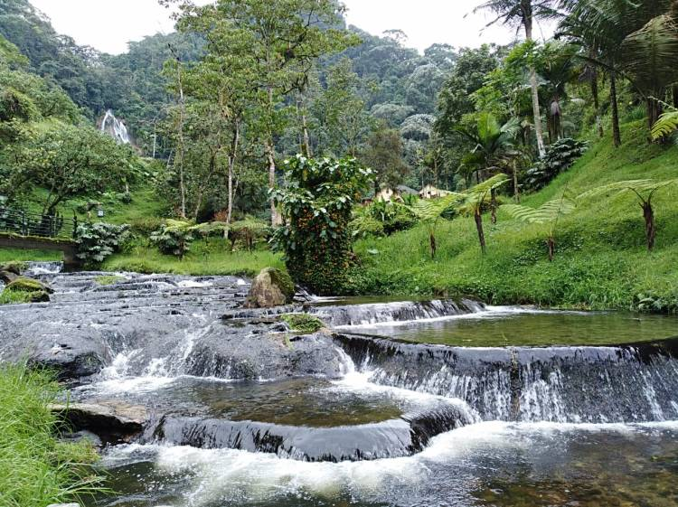 Hot springs Santa Rosa de Cabal Pasadia Waterfall Natural environment Book online