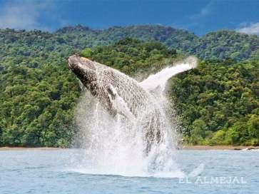 avistamiento de ballenas colombia 800x600 1
