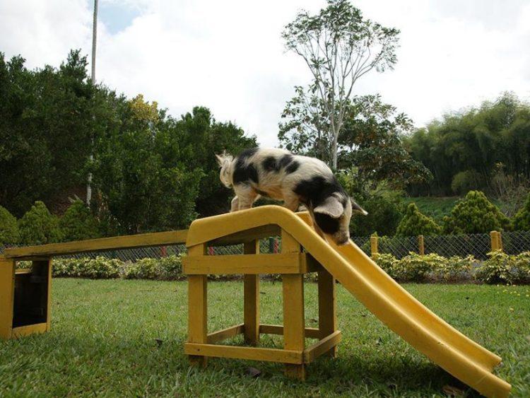 Pork-Panaca-Quindio-Theme-Park-Colombia