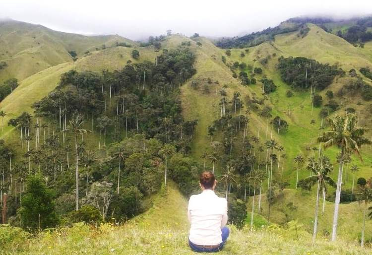 Spotting Cocora Valley