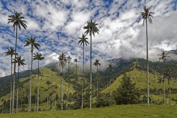 Salento y Valle del Cocora