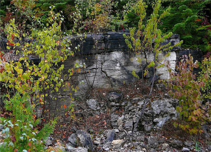 colonial quarry lower fossil hill outcrop