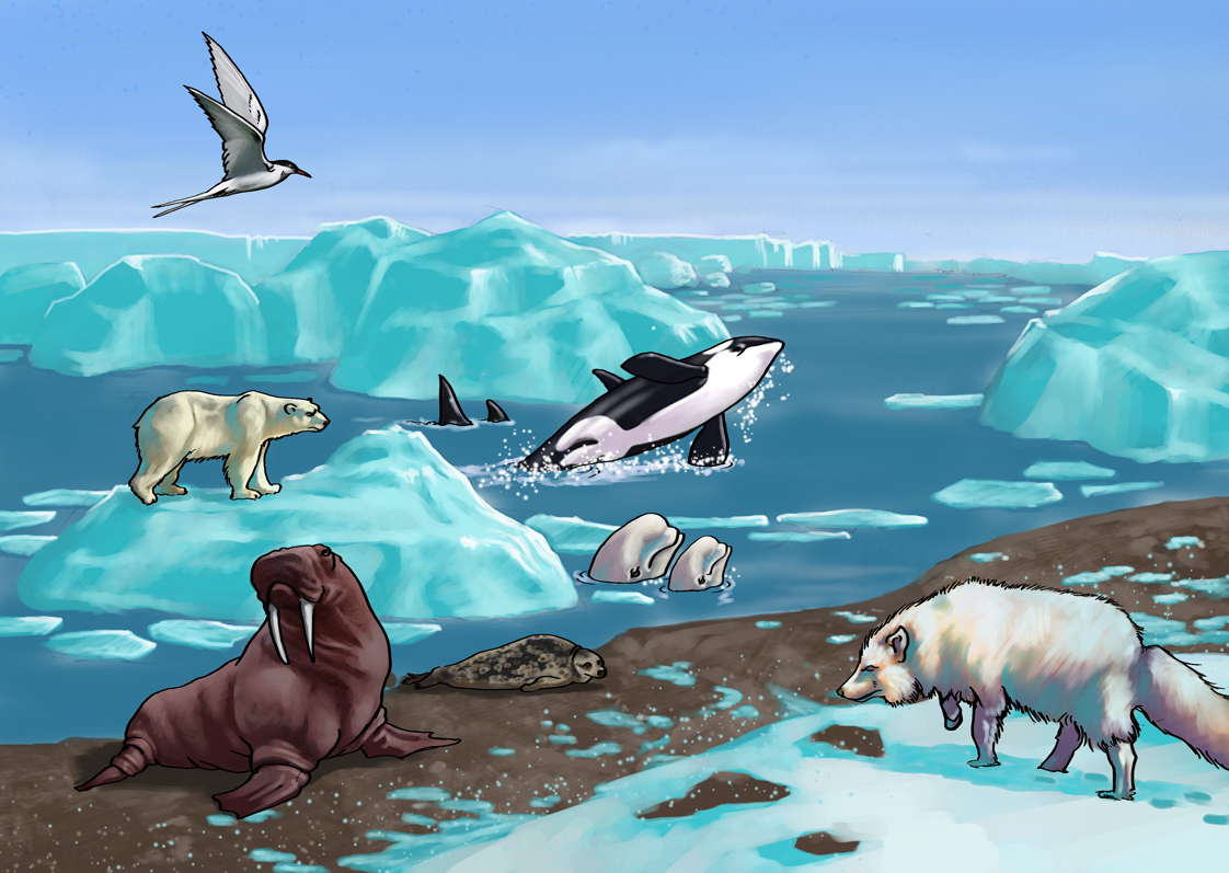 6th Grade Science Ecosystems