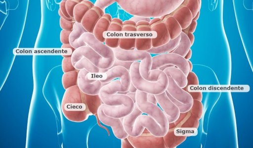 tumore del colon, cancro del colon, anatomia del colon