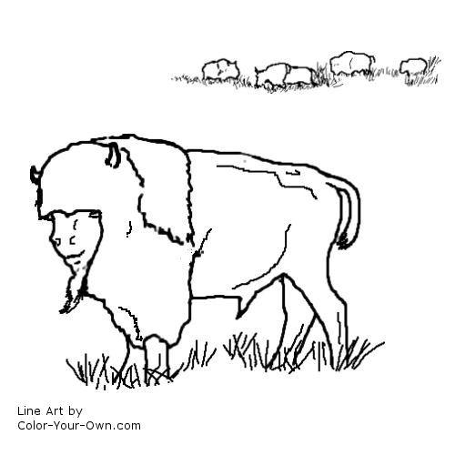 buffalo coloring page