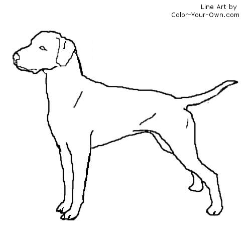 dalmatian dog coloring pages cooloring com