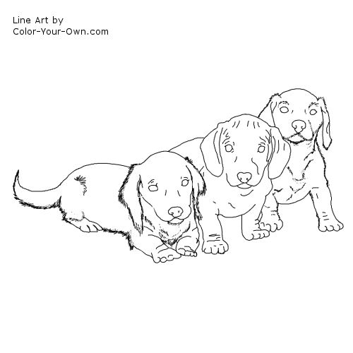 dachshund puppy coloring page