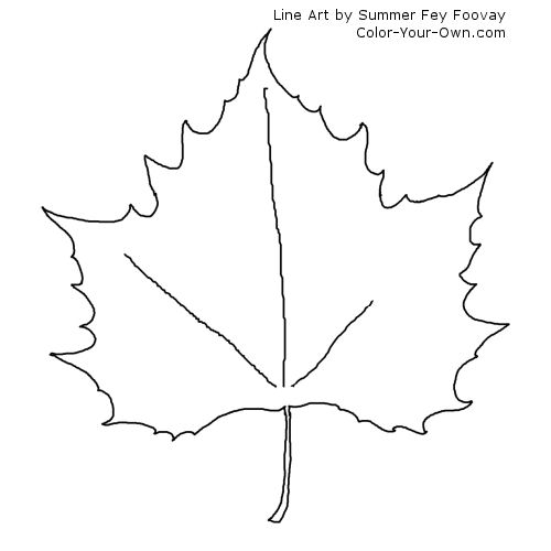 maple leaves coloring pages maple leaf sketch coloring page jpg