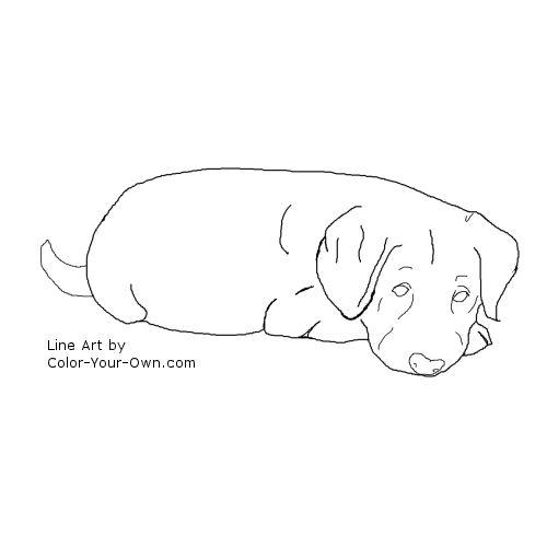 labrador retriever puppy colouring pages