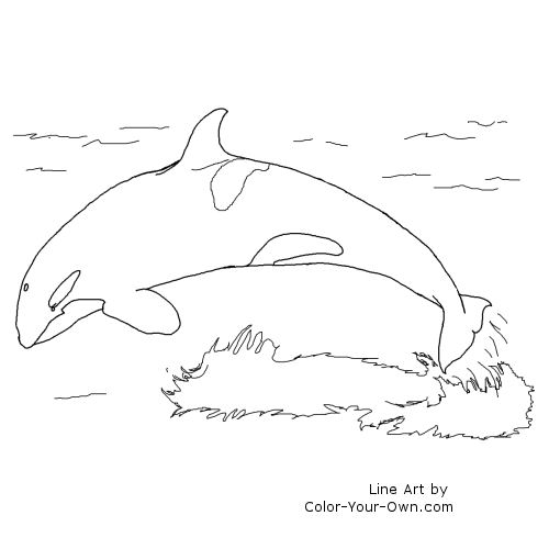 Wildlife Orca Coloring Page