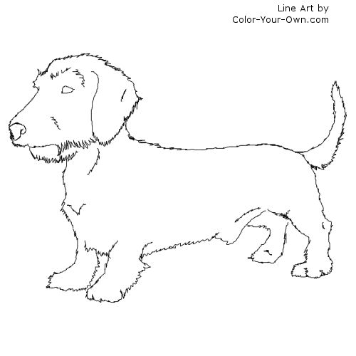 wirehaired dachshund dog coloring page