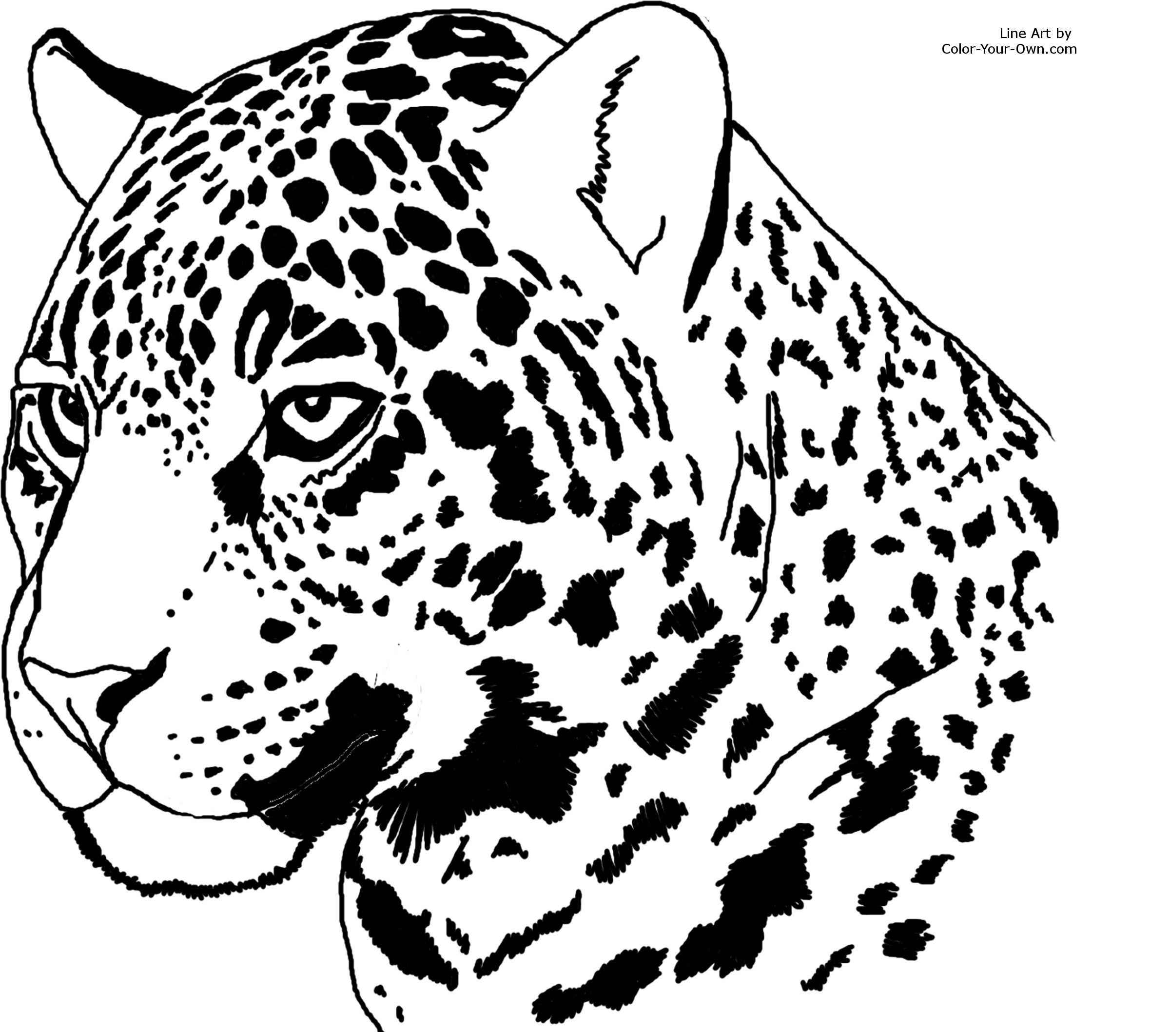 Jaguar Headstudy Coloring Page