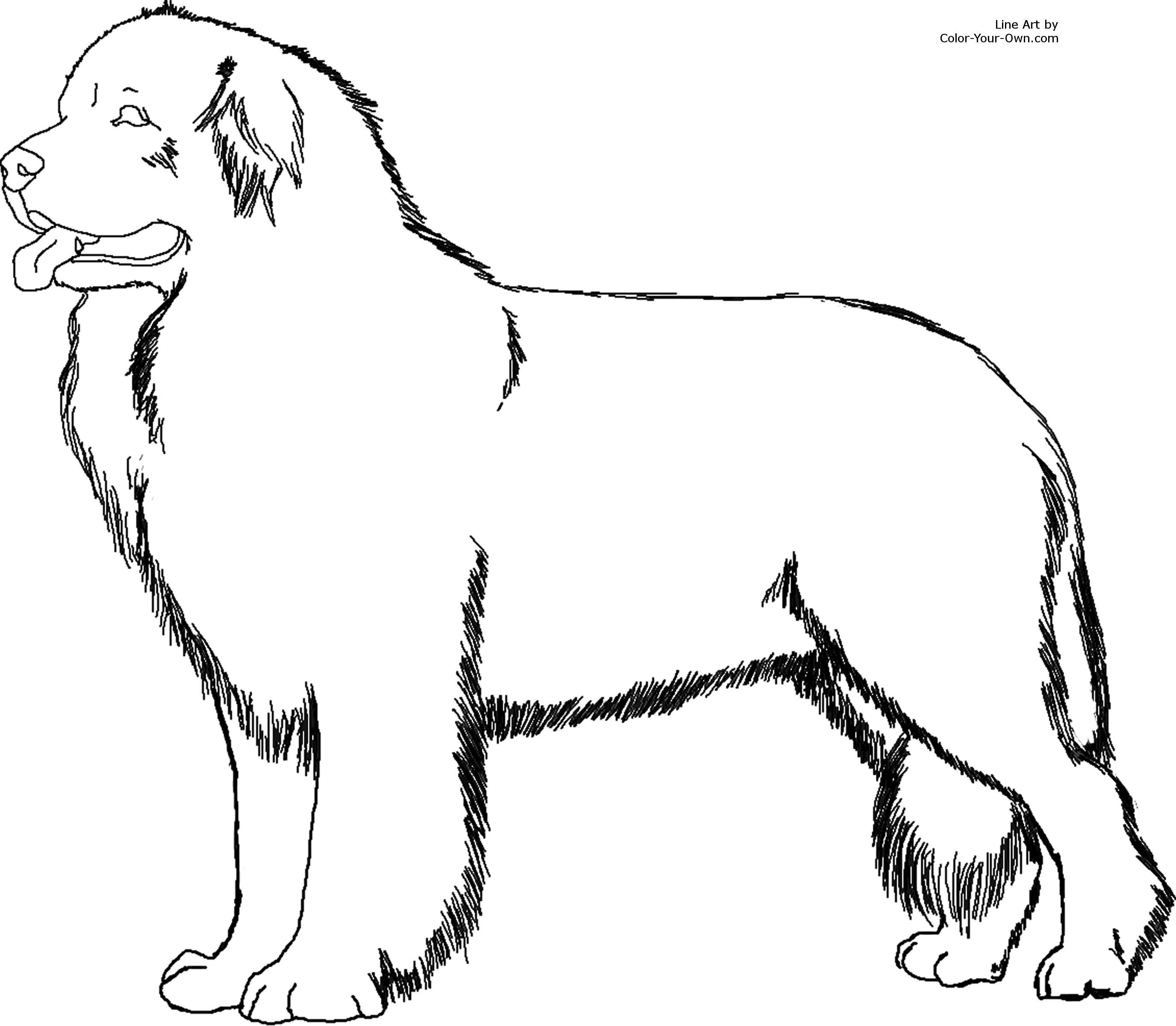 Newfoundland Dog Coloring Page