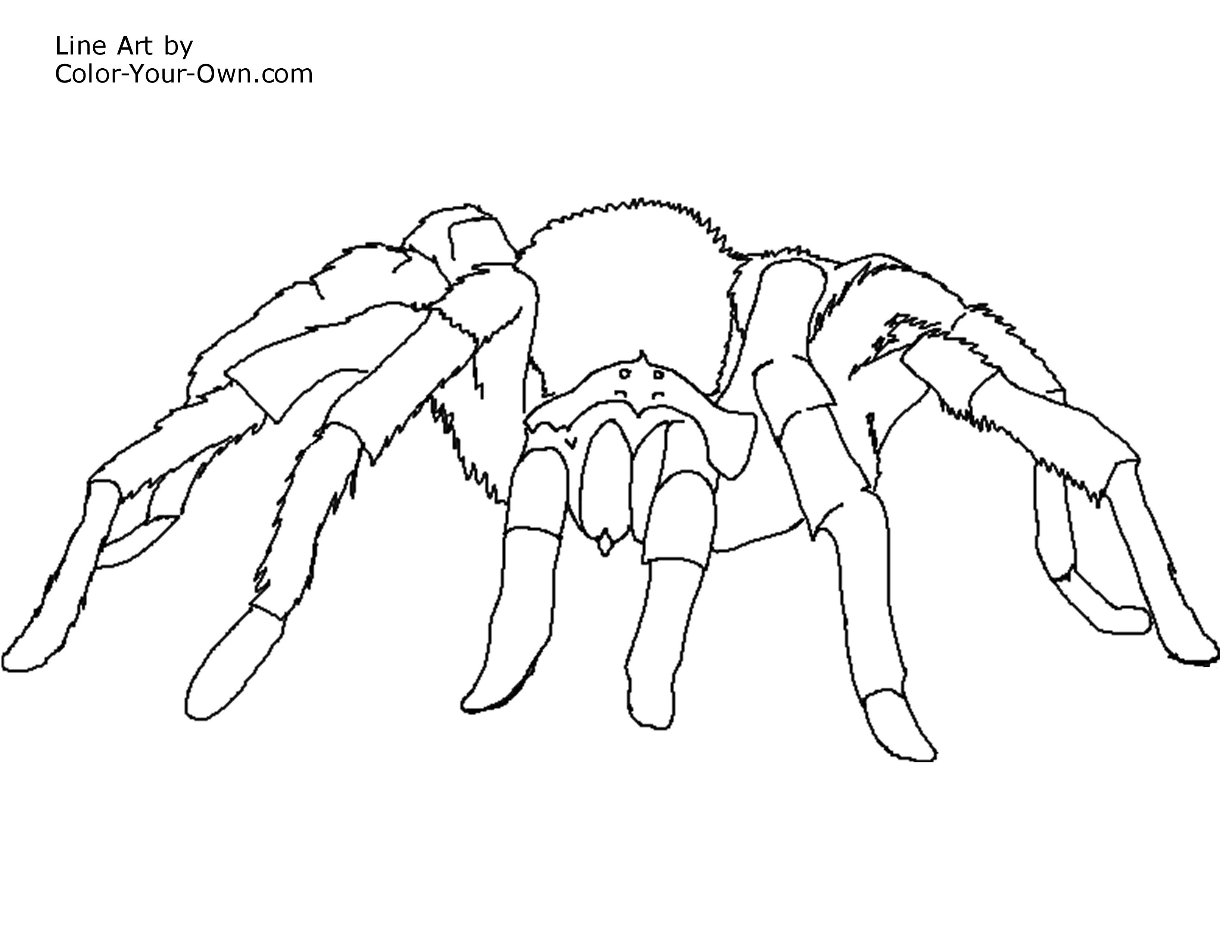 new free printable coloring pages electric eel tarantula spider