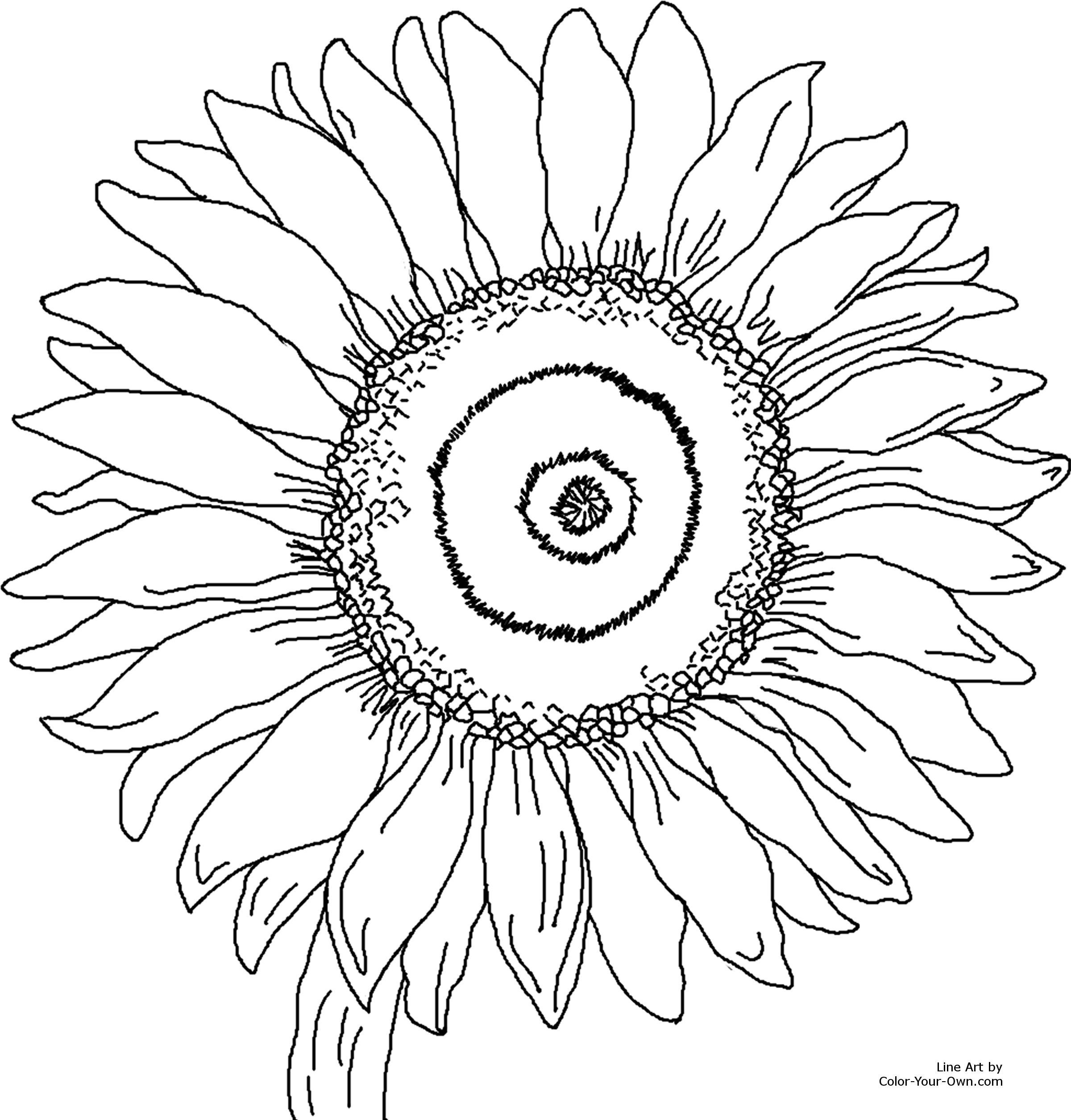 sunflower coloring pages online coloring