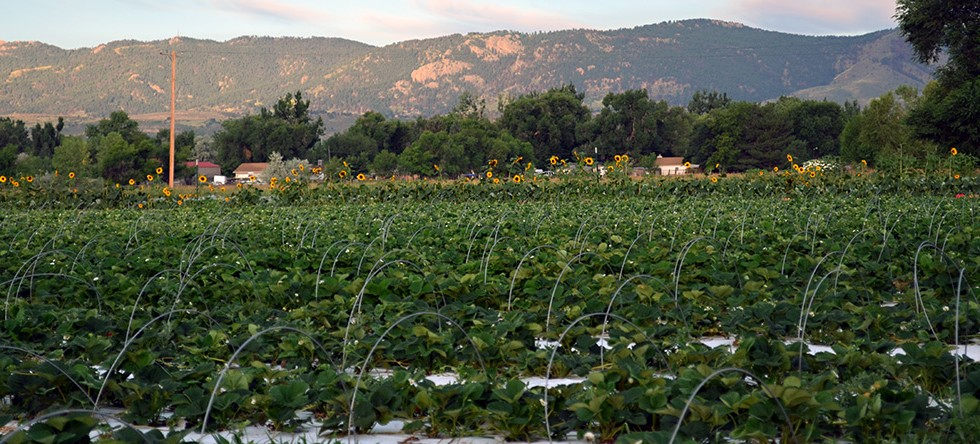 Charming Colorado Farms You\'ll Love