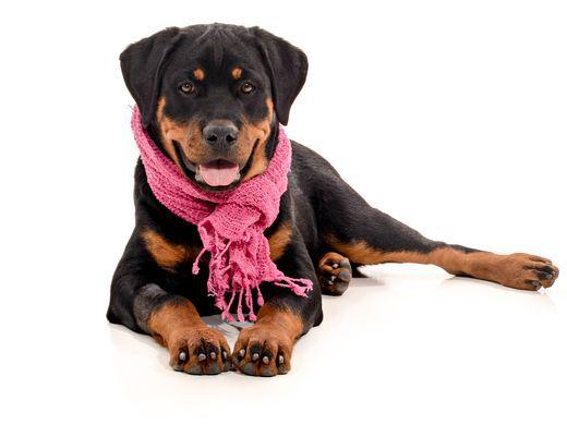 dogs of denver