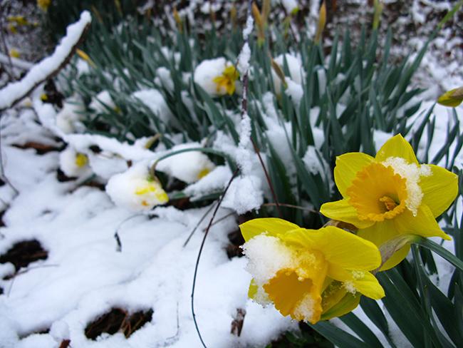 Denvers latest spring snowfall on record june mightylinksfo