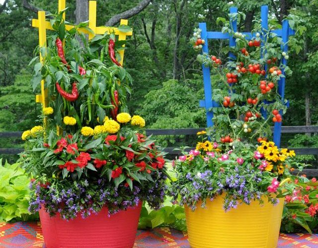 Container Growing Vegetables Container vegetable gardens make growing your own veggies easy container garden workwithnaturefo