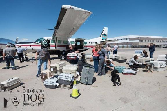Courtesy of Colorado Dog Photography, via Colorado Rescue Tails Facebook