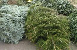recycle christmas tree