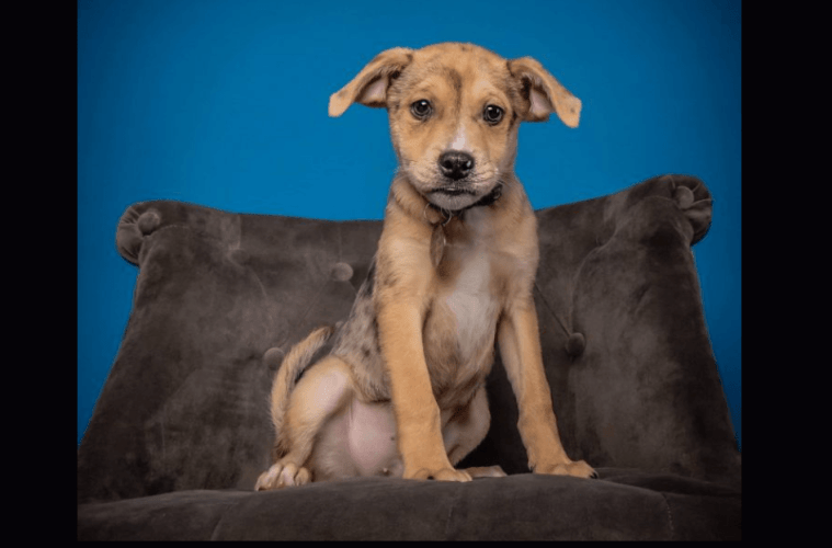 The Cutest Puppies Available For Adoption In Denver