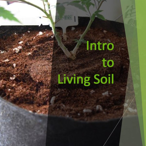 Intro to Living Soil