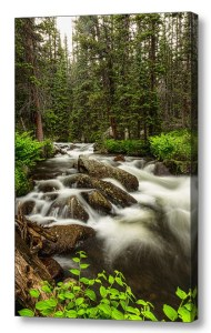 National Forest Stream Portrait Canvas Art